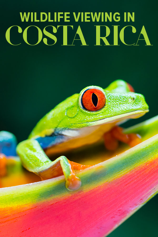 costa rica wild life all inclusive vacations cruise to costa rica